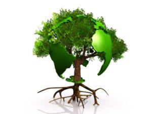 globe_träd