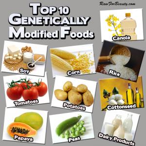 GMO_top_tio