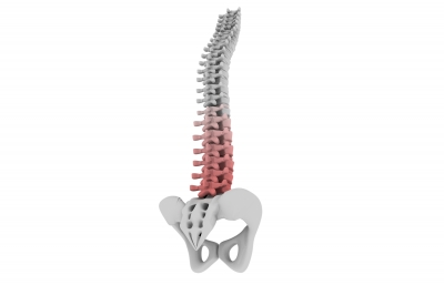 Human Spinal Columnby cooldesign