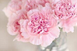 flowers-1325012_1280
