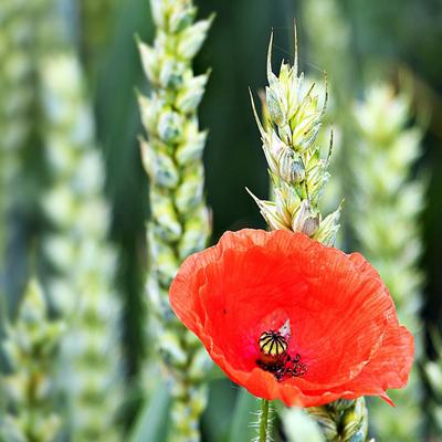 jordbruk_ekologiskt