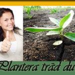 plantera_träd